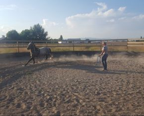 Electric Equine, electric equine, electric equine llc Electric Equine LLC, Belgrade horse boarding, bozeman horse boarding, belgrade horse training, belgrade horse riding lessons, riding lessons
